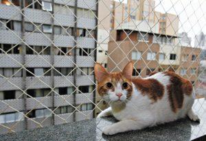 redes de proteção para animais de estimação
