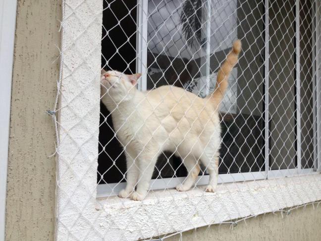 a7c3acc34e6f Redes de Proteção para animais de estimação - Melhor preço da Região